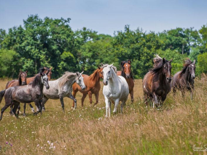 au-pré-des-chevaux-grain-de-pixel-photographe-equestre-animalier-4