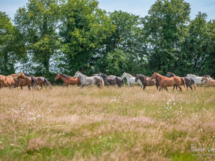 au-pre-des-chevaux-2-troupeau-grain-de-pixel-photographe-equestre