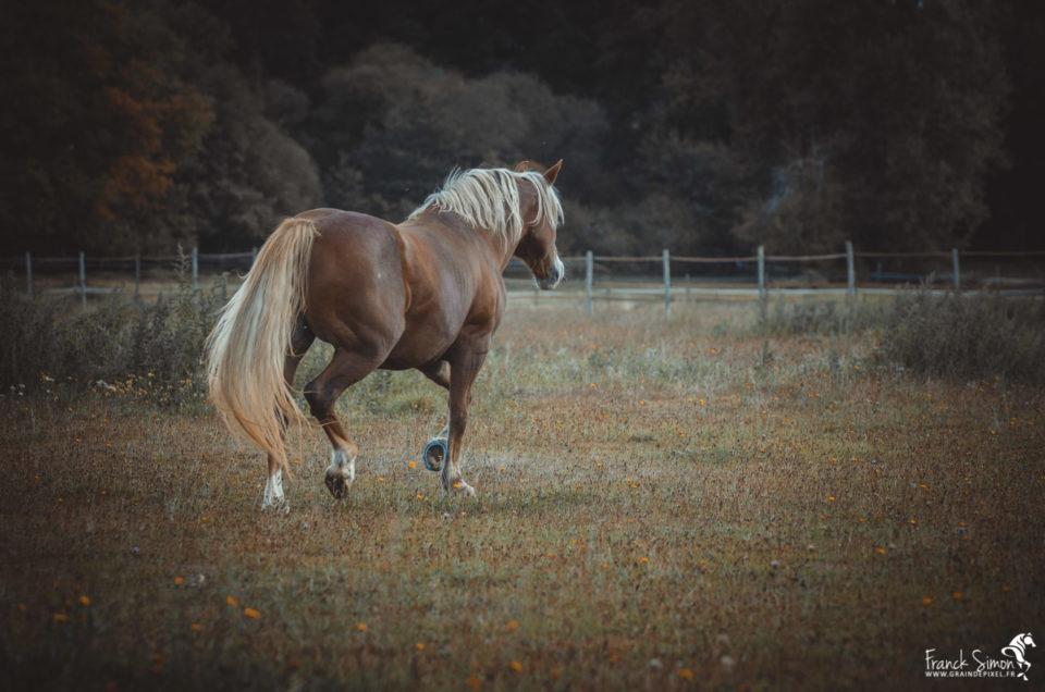 liberté-écurie-de-mark-grain-de-pixel-photographe-equestre-et-animalier-1-91