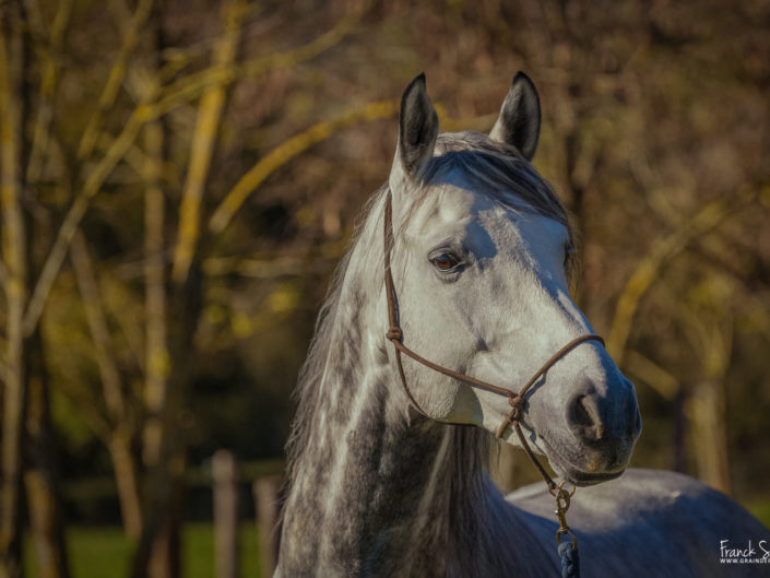 cheval-bavard-grain-de-pixel-photographe-equestre-animalier-2