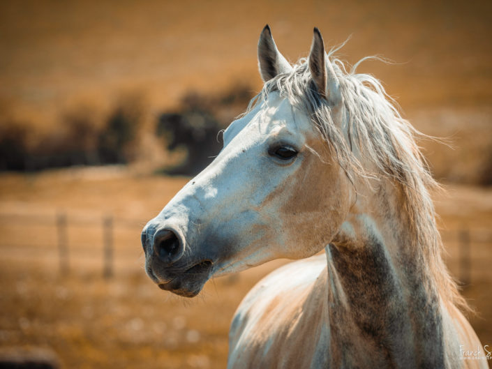 cheval-bavard-grain-de-pixel-photographe-equestre-et-animalier-1-72