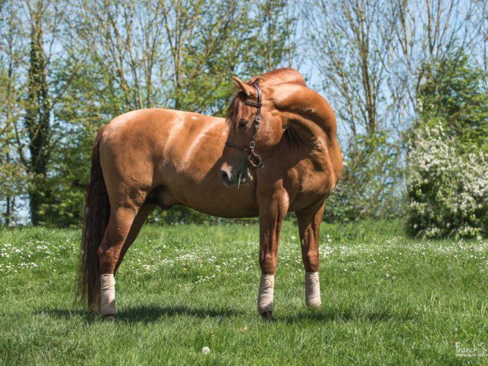 cheval-bavard-grain-de-pixel-photographe-equestre-et-animalier-1-26