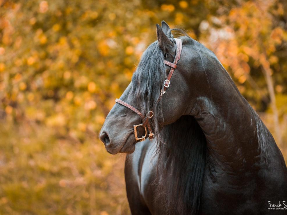 portraits-équestres-cheval-bavard-grain-de-pixel-photographe-equestre-animalier-2