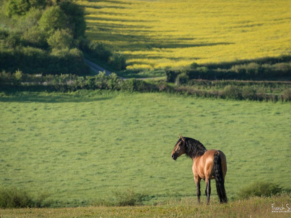 cheval-bavard-grain-de-pixel-photographe-equestre-et-animalier-1-91