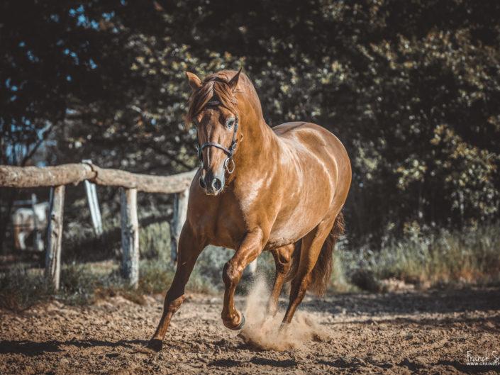 cheval-bavard-grain-de-pixel-photographe-equestre-et-animalier-1-5