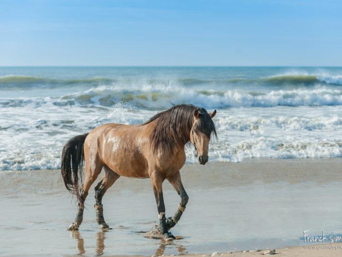 cheval-bavard-plage-série-équestre-franck-simon-grain-de-pixel-photographe-