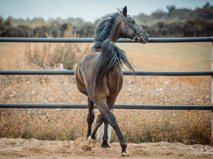 cheval-danseur-grain-de-pixel-photographe-equestre