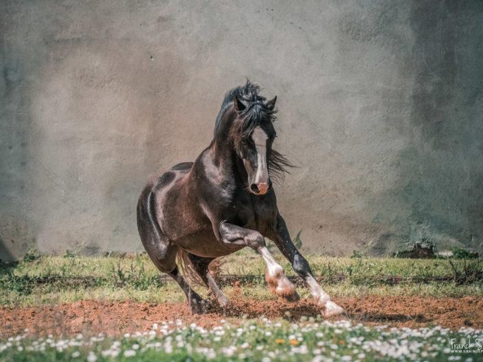 cheval-mouvement-grain-de-pixel-photographe-équestre-charente-franck-simon