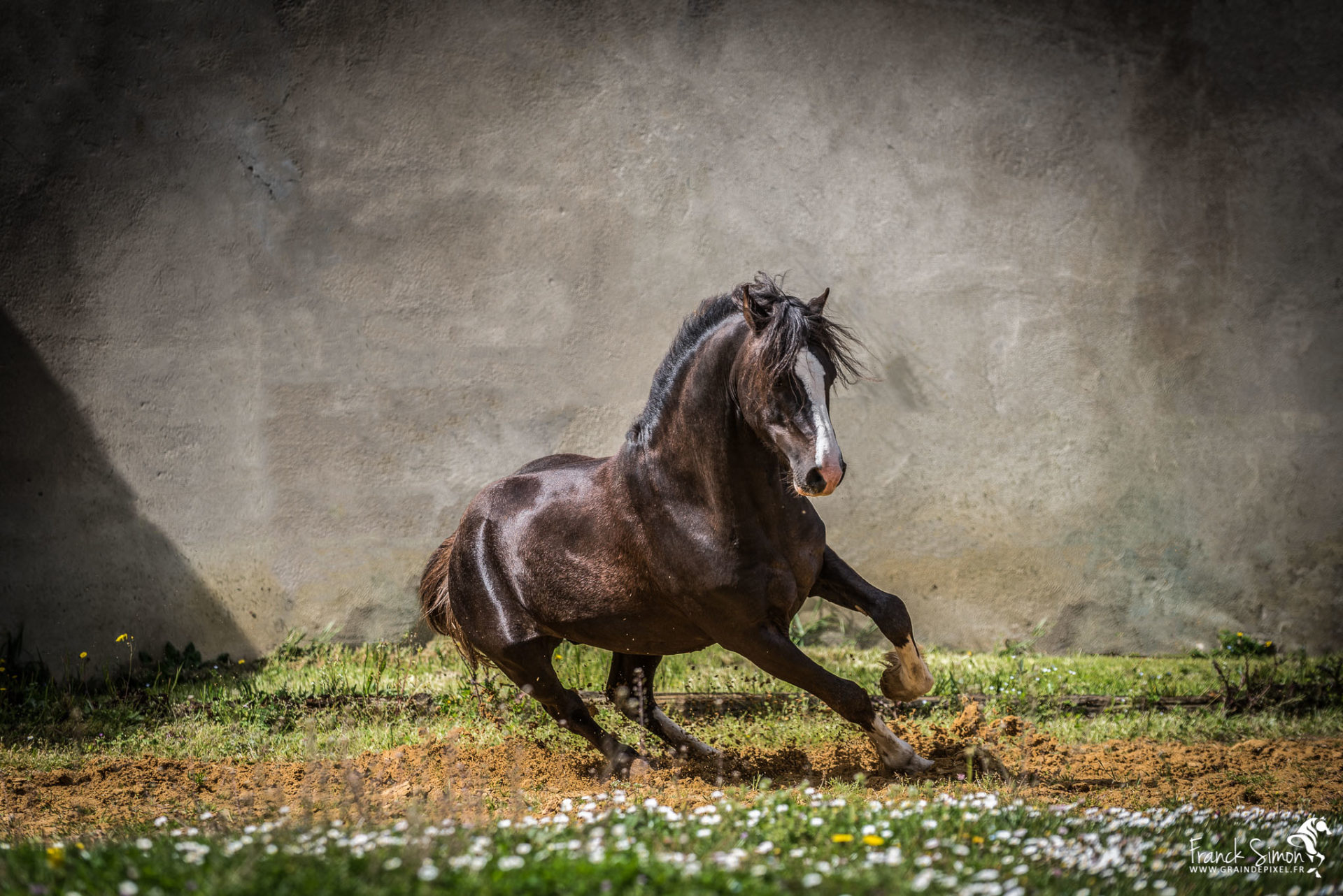 Photographier le cheval en mouvement comment faire ?