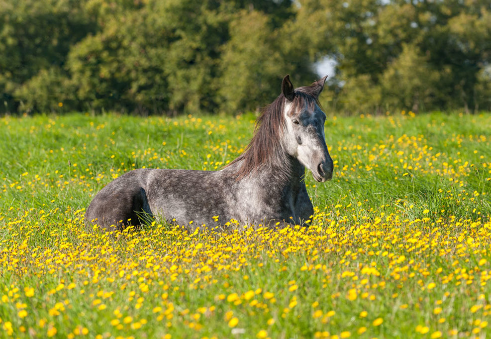 cheval-pré-grain-depixel-photographe-equestre