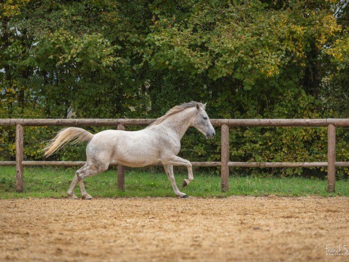 cindy-vikki-séance-cavalier-franck-simon-photographe-équestre-et-animalier-charente-115