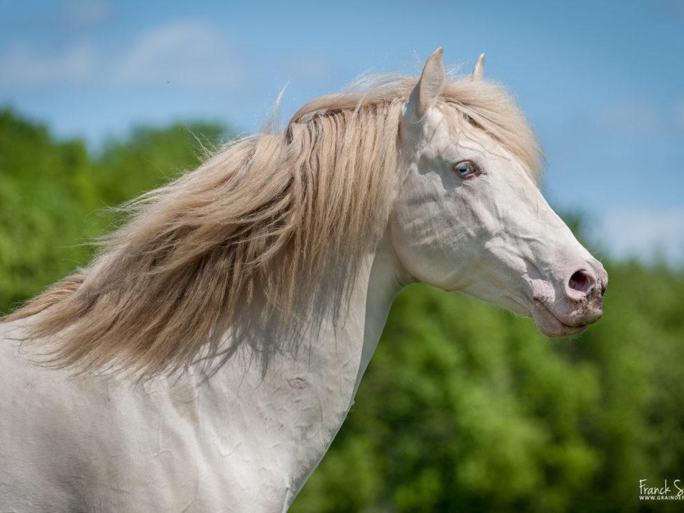 elevage-dorianeva-grain-de-pixel-photographe-equestre-et-animalier-1-18