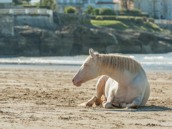 chevaux-liberté-franck-simon-grain-de-pixel-photographe-equestre-2animalier