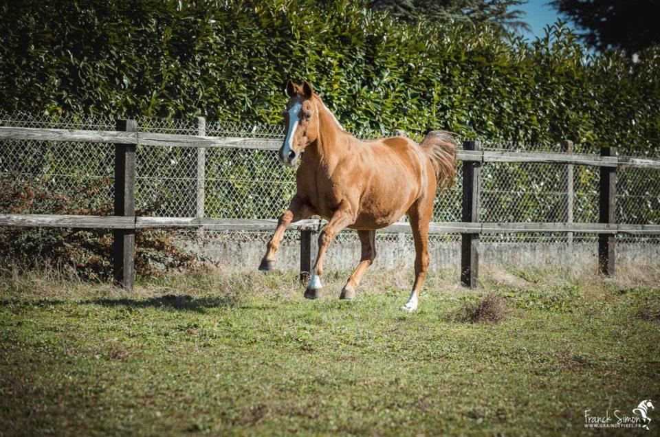liberté-chevaux-séance-cavalier-franck-simon-grain-de-pixel-photographe-equestre-animalier-
