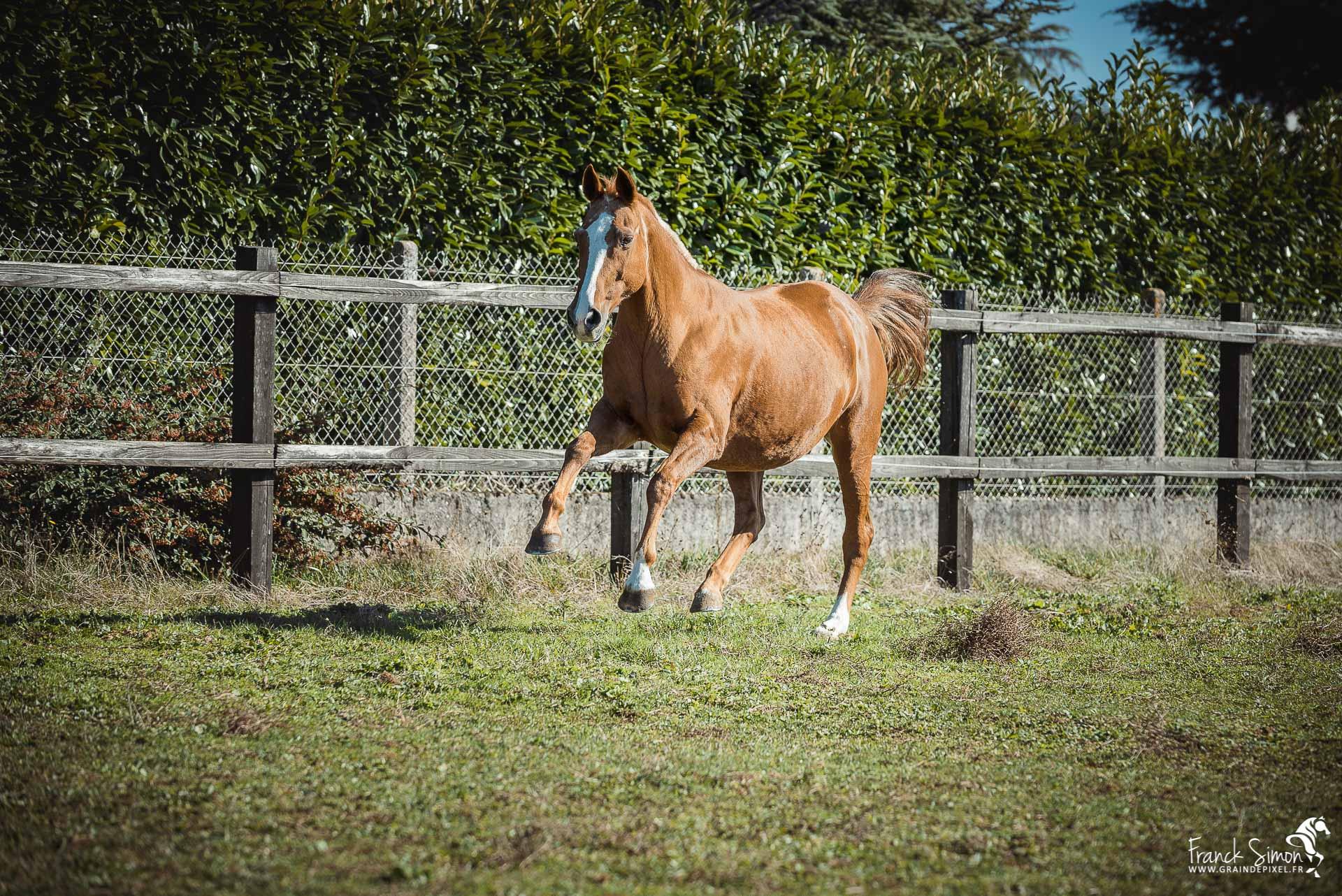 Photographier un cheval en liberté : arrière-plan et clôture