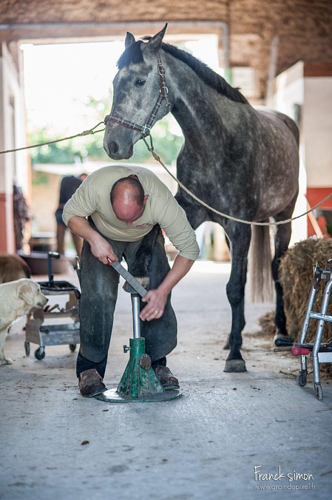 maréchal-ferrant-serie-grain-de-pixel-photographe-equestre-