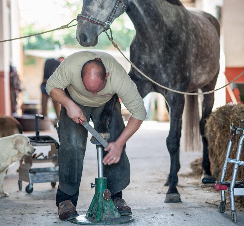 maréchal-ferrant-serie-grain-de-pixel-photographe-equestre