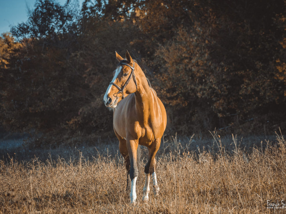 marion-venise-séance-cavalier-equestre-franck-simon-photographe-équestre-et-animalier-charente-9