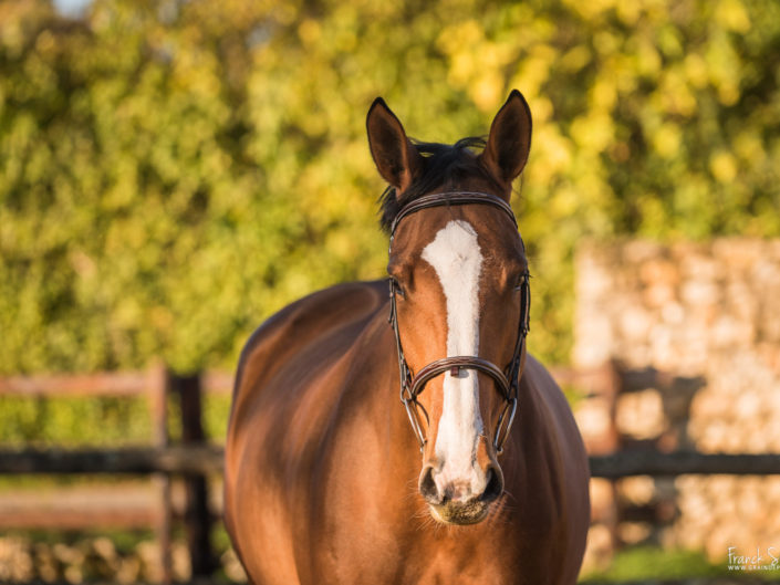 portrait-cheval-marion-venise-séance-cavalier-equestre-franck-simon-photographe-équestre-et-animalier-charente-32