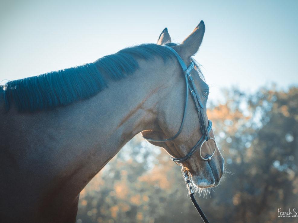 marion-venise-séance-cavalier-equestre-franck-simon-photographe-équestre-et-animalier-charente-32