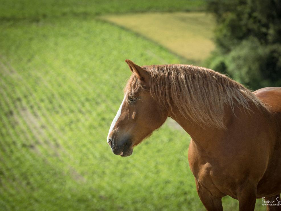 maya-liberté-cheval-franck-simon-grain-de-pixel-photographe-equestre-animalier-7