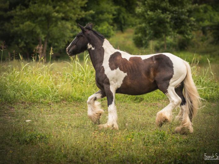 moulin-du-got-grain-de-pixel-photographe-equestre-animalier-5