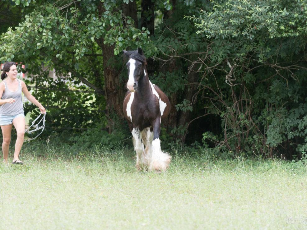 moulin-du-got-grain-de-pixel-photographe-equestre-animalier-7
