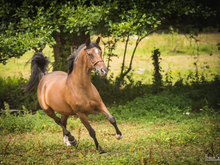 moulin-du-got-grain-de-pixel-photographe-equestre-animalier-5