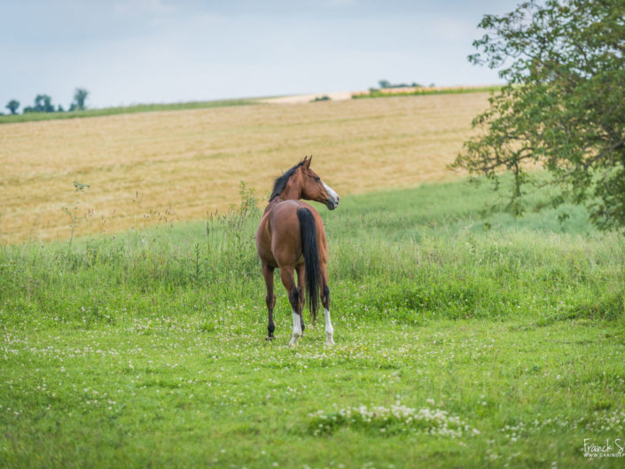 océlan-studio-équestre-grain-de-pixel-photographe-equestre-animalier-6-2
