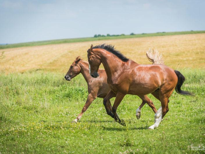 océlan-studio-équestre-grain-de-pixel-photographe-equestre-animalier-7