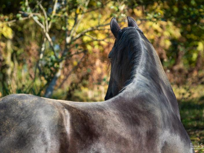 portrait-cheval-grain-de-pixel-photographe-equestre-2