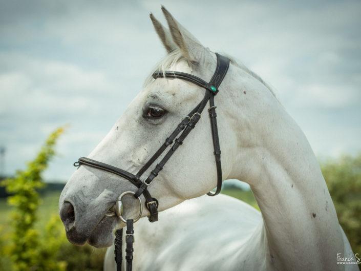 portrait-cheval-grain-de-pixel-photographe-equestre-21