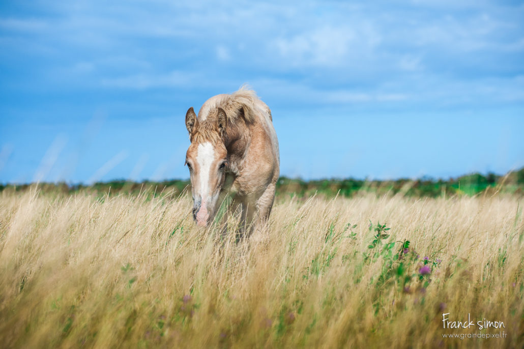 trait-breton-grain-de-pixel-photographe-equestre