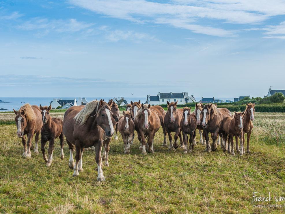 trait-breton-grain-de-pixel-photographe-equestre