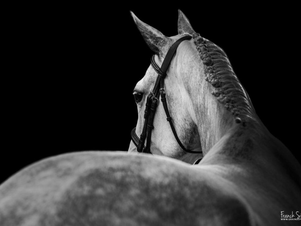 Vice-Versa-la-pouyade-grain-de-pixel-photographe-equestre-animalier-1