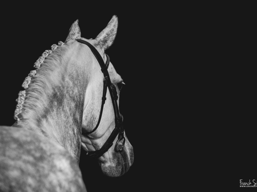 Vice-Versa-Etrier-charentais-grain-de-pixel-photographe-equestre-animalier-1