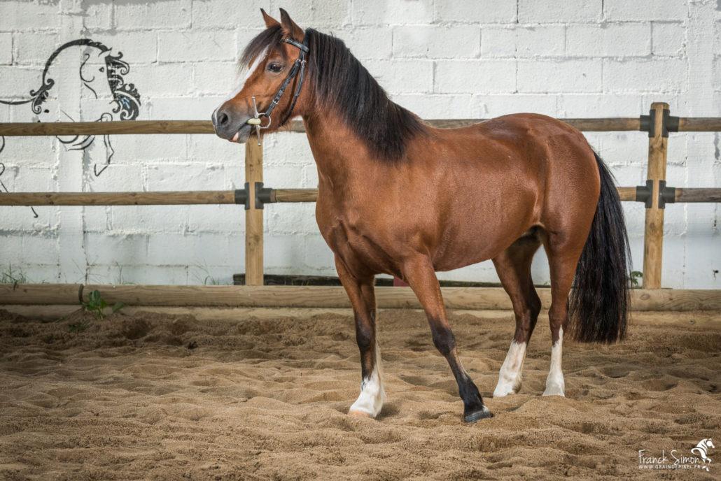 ecurie-de-mark-studio-equestre-grain-de-pixel-photographe-equestre-et-animalier-1-124