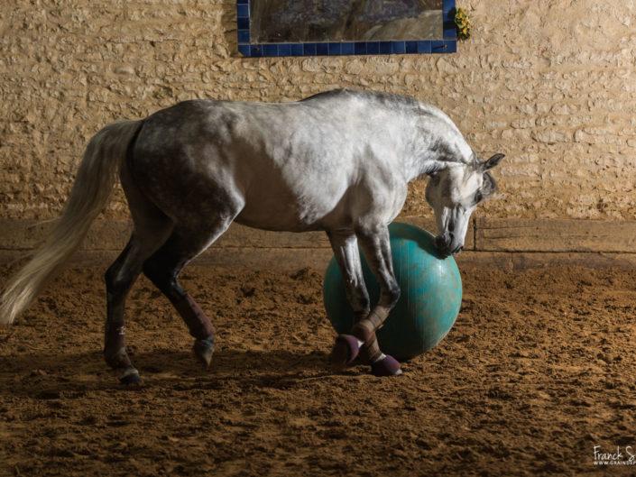 cheval-bavard-grain-de-pixel-photographe-equestre-et-animalier-1-29
