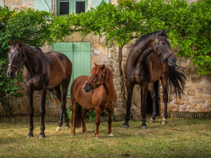 chevaux-studio-equin-franck-simon-grain-de-pixel-photographe-equestre-animalier