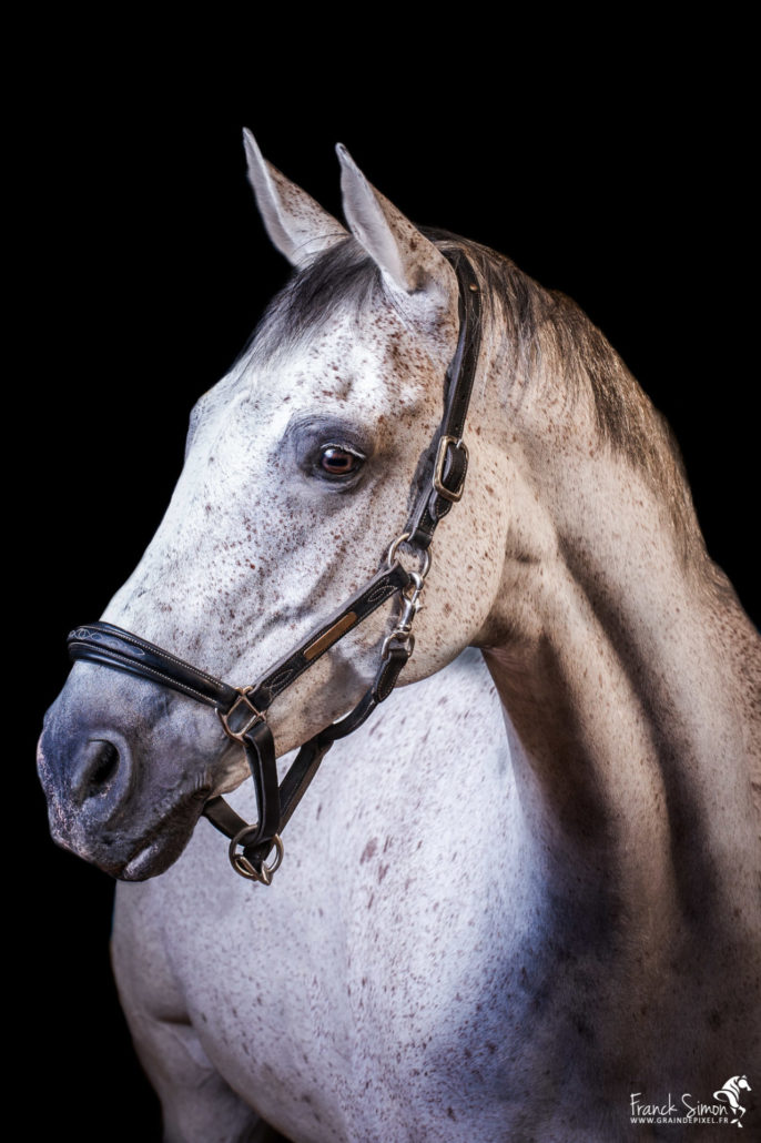 étrier-charentais-studio-équestre-grain-de-pixel-photographe-equestre-et-animalier-1-24