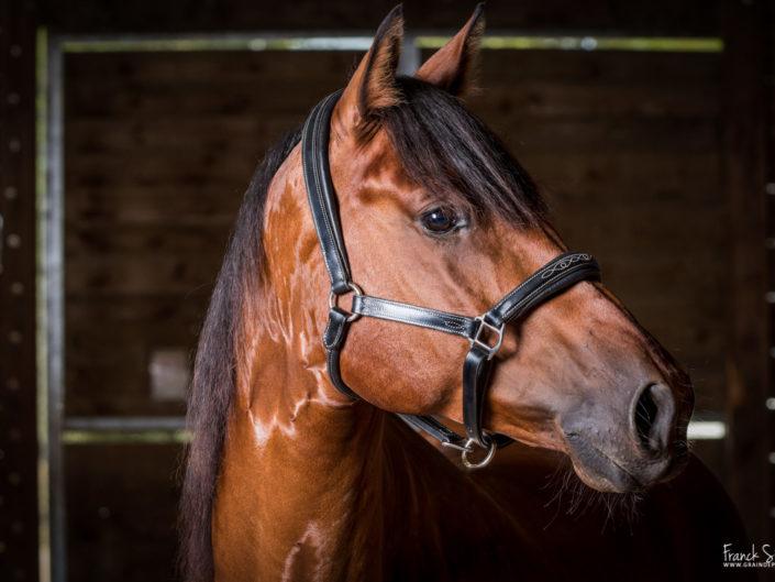 fil-et-crin-couverture-box-grain-de-pixel-photographe-equestre-animalier-1