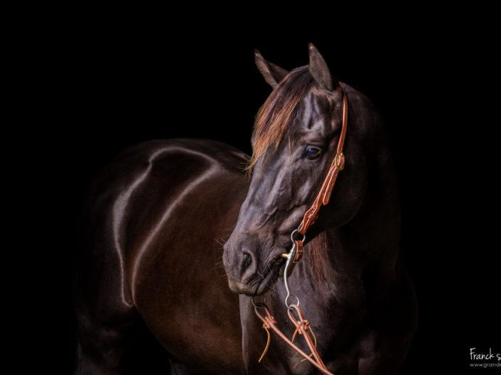 leanin-bob-studio-equestre-grain-de-pixel-photographe-equestre