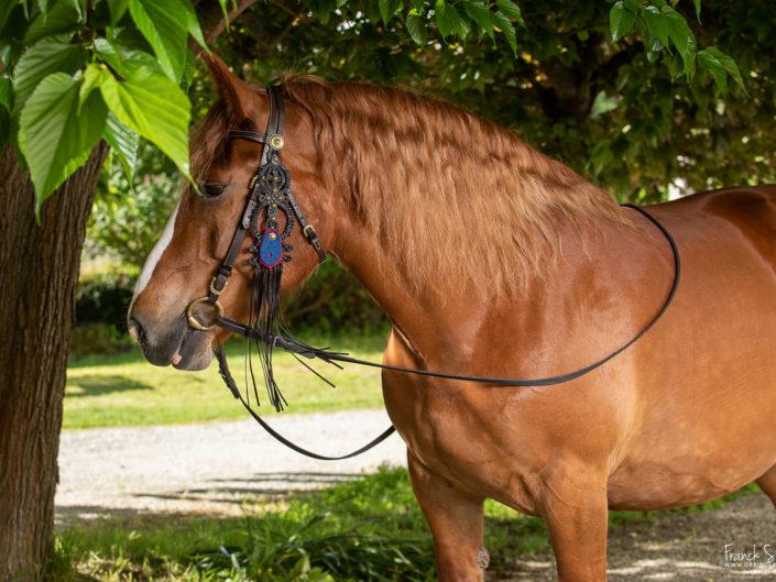 maya-studio-cheval-franck-simon-grain-de-pixel-photographe-equestre-animalier-2