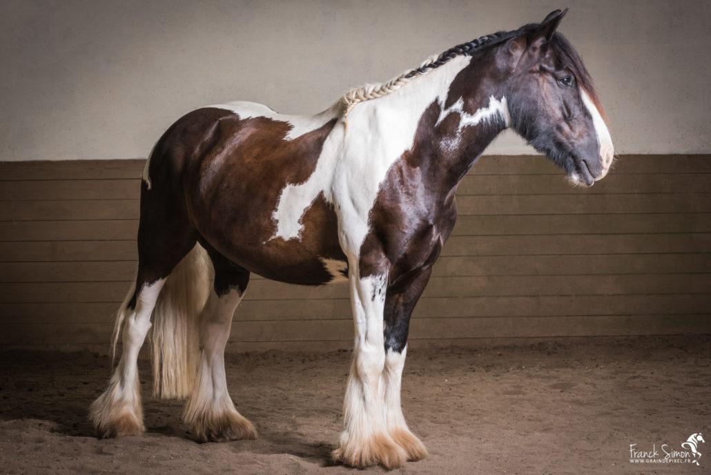 studio-équestre-moulin-du-got-grain-de-pixel-photographe-equestre-animalier-4