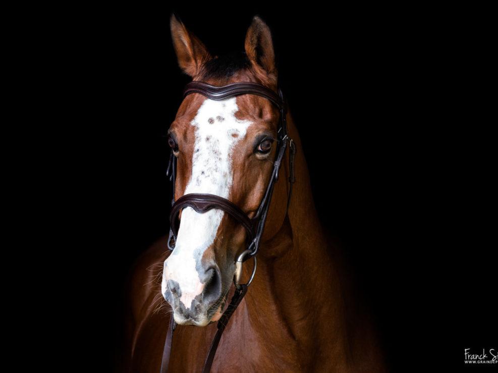 océlan-studio-équestre-grain-de-pixel-photographe-equestre-animalier-1