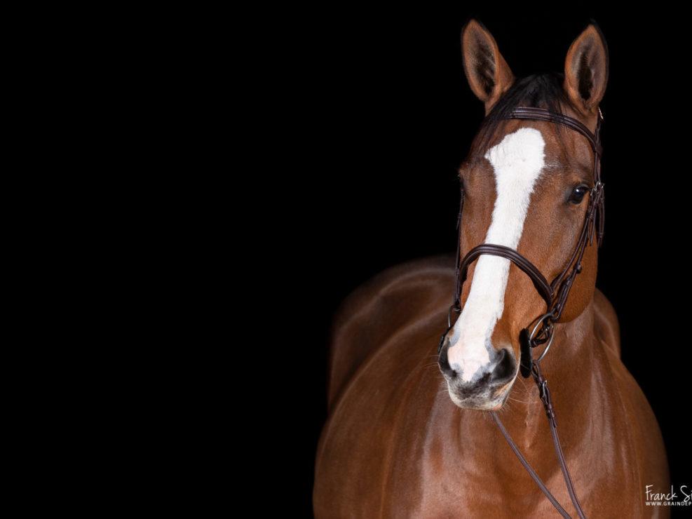 photo-cheval-en-studio-chien-franck-simon-photographe-équestre-et-animalier-charente-2