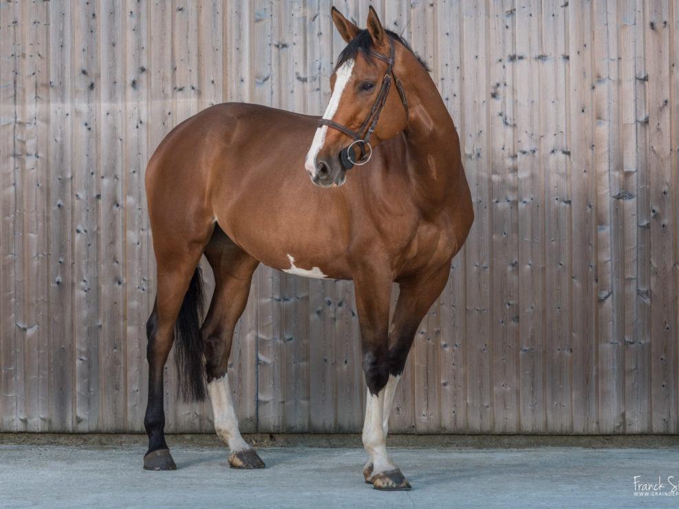 physiothérapeuthe-équin-marion-tarbel-grain-de-pixel-photographe-equestre-animalier-20