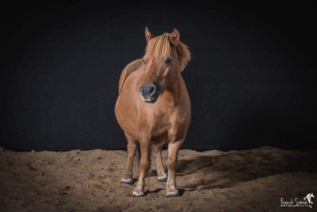 poney-studio-cheval-franck-simon-photographe-équestre-