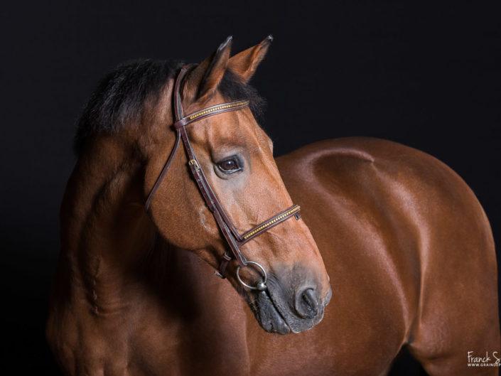 portrait-cheval-studio-léon-grain-de-pixel-photographe-equestre-2
