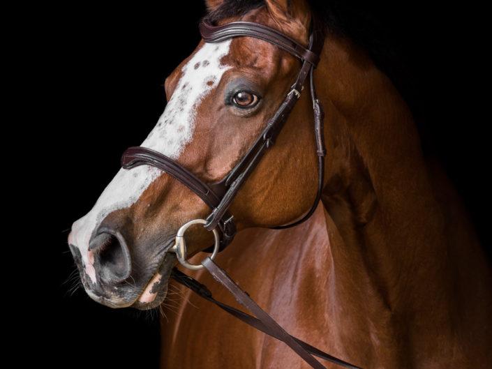studio-equestre-etrier-charentais-franck-simon-grain-de-pixel-phototgraphe-equestre-10